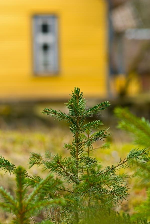 övre treebarn för gran arkivfoton