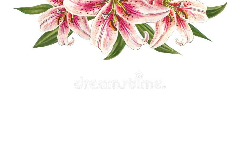 Övreram för härlig rosa lilja Bukett av blommor Blom- tryck Mark?rteckning royaltyfri illustrationer