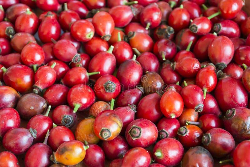 Úlcera Rose Berries, fondo rojo brillante fotos de archivo