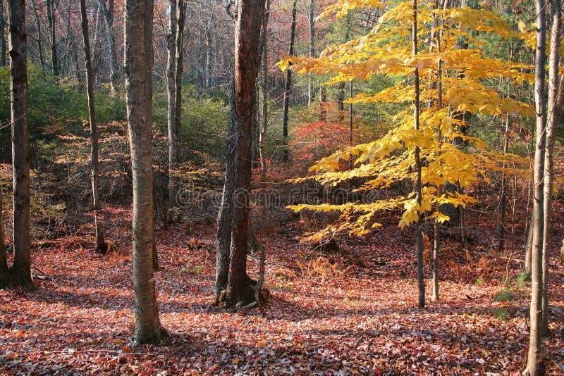 Última posição da árvore fotografia de stock royalty free