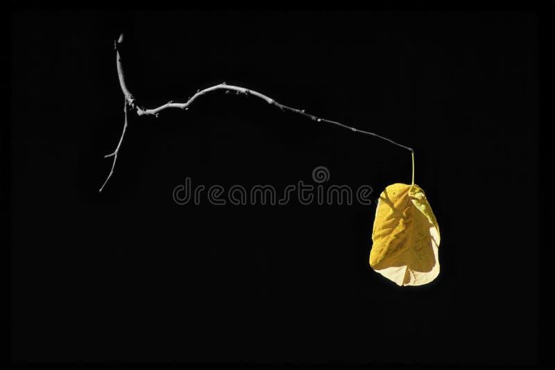 Último Autumn Leaf Holds amarelo dourado sobre à vida imagens de stock