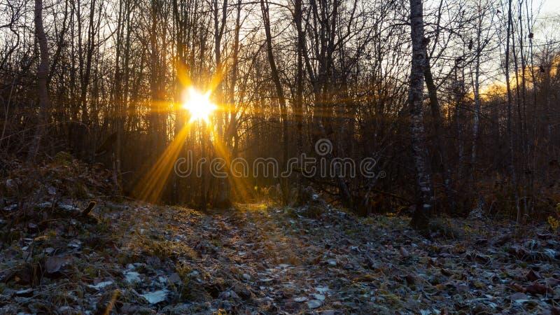 Último otoño en el bosque en la salida del sol, la escarcha y la primera nieve, paisaje rural, fondo fotografía de archivo libre de regalías