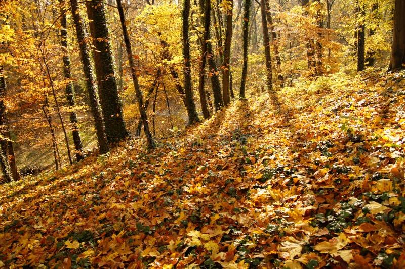 Download Últimos dias do outono foto de stock. Imagem de escuro - 16860064