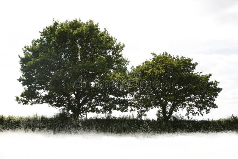 Única árvore imagem de stock royalty free