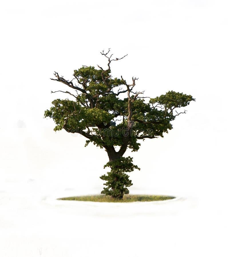 Única árvore fotos de stock royalty free