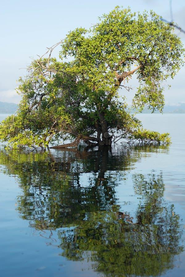 Única árvore crescida na costa do mar ao lado do cais com reflexões na água imagem de stock