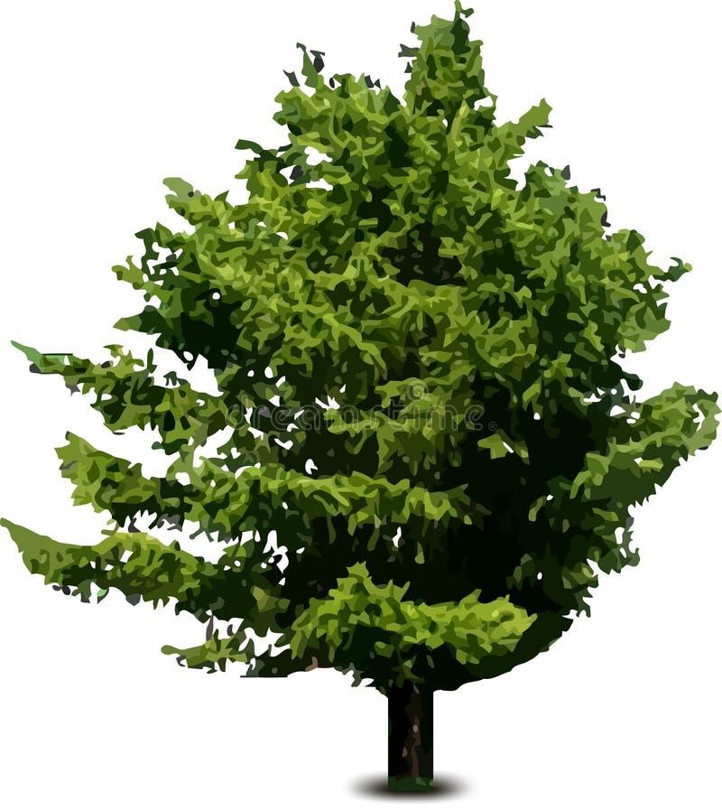 Única árvore de abeto do pinho isolada no branco. Vetor ilustração stock