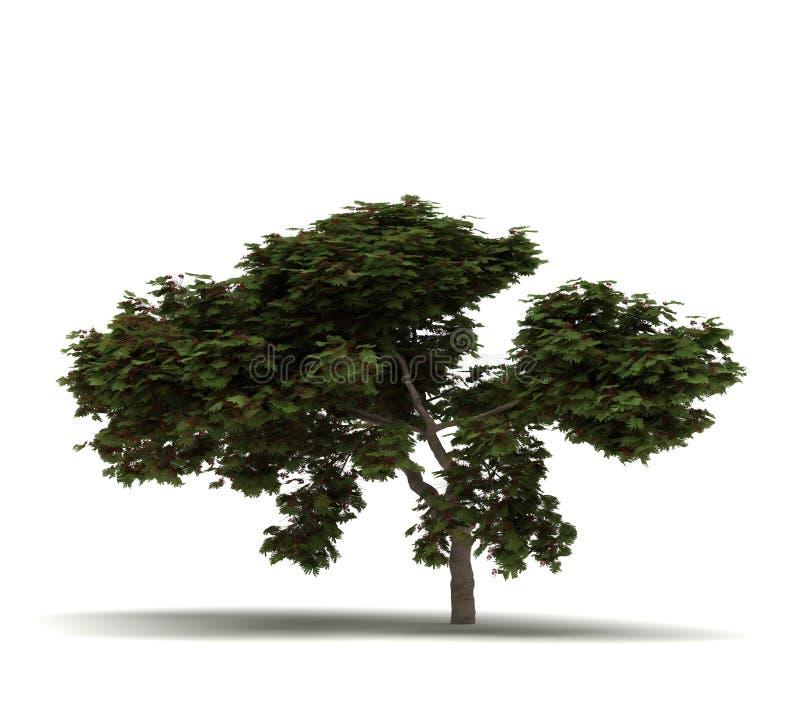 Única árvore de chama ilustração do vetor
