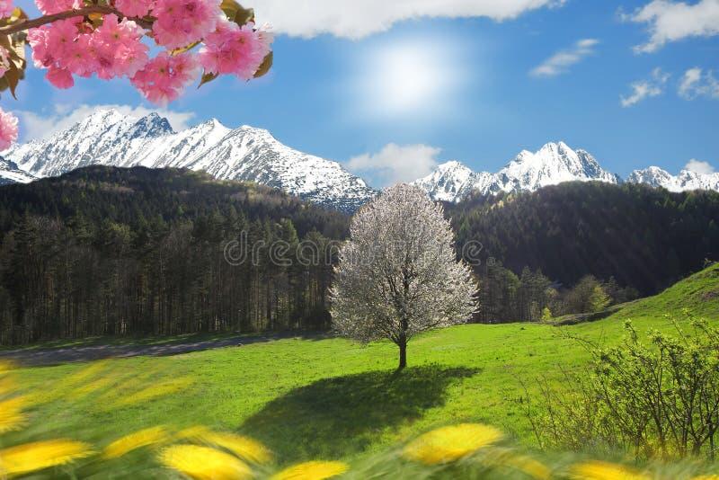 Única árvore de florescência de encontro ao sol fotos de stock royalty free