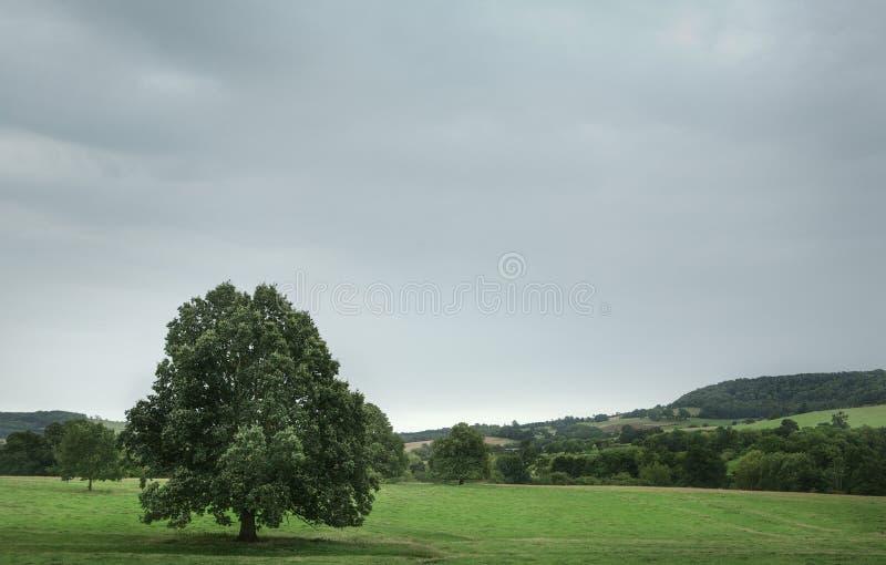 Única árvore em um campo imagem de stock royalty free