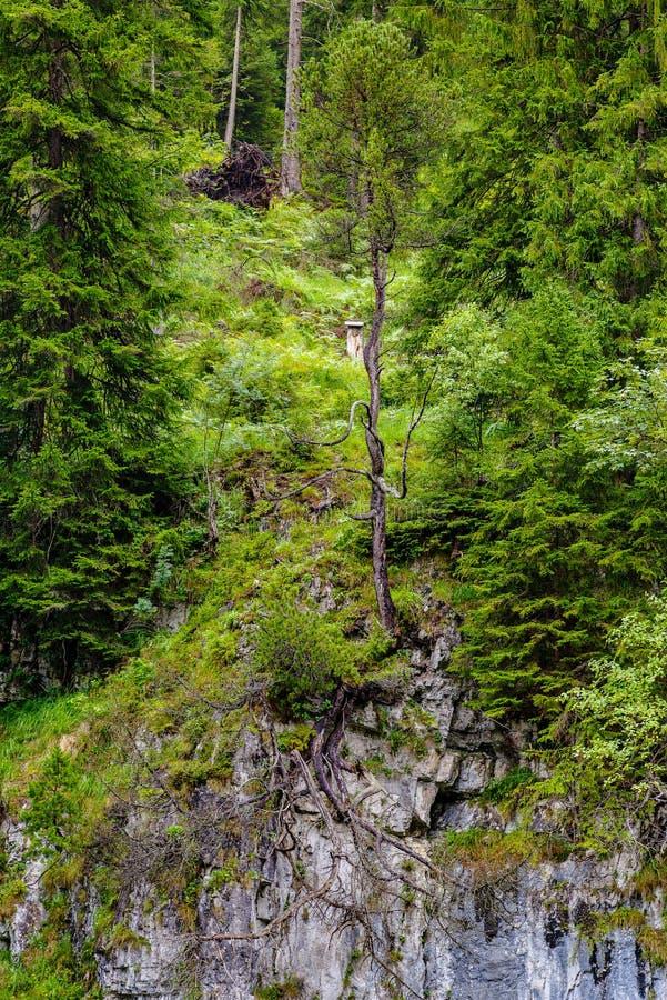 Única árvore na borda de uma rocha fotografia de stock royalty free