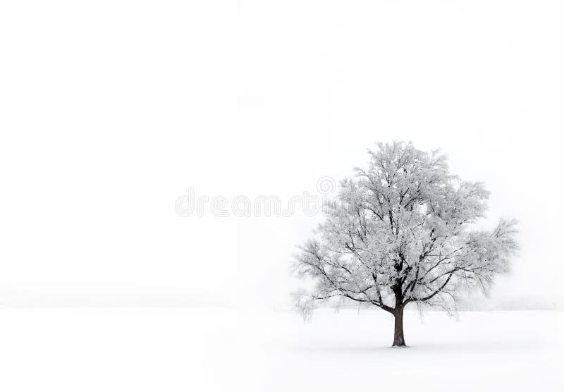 Única árvore na névoa com hoar-frost fotografia de stock