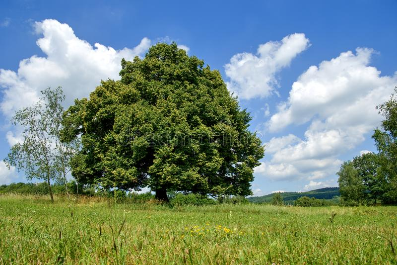 Única árvore no campo fotografia de stock royalty free