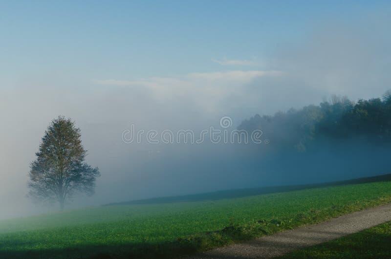 Única árvore no campo nevoento fotografia de stock royalty free