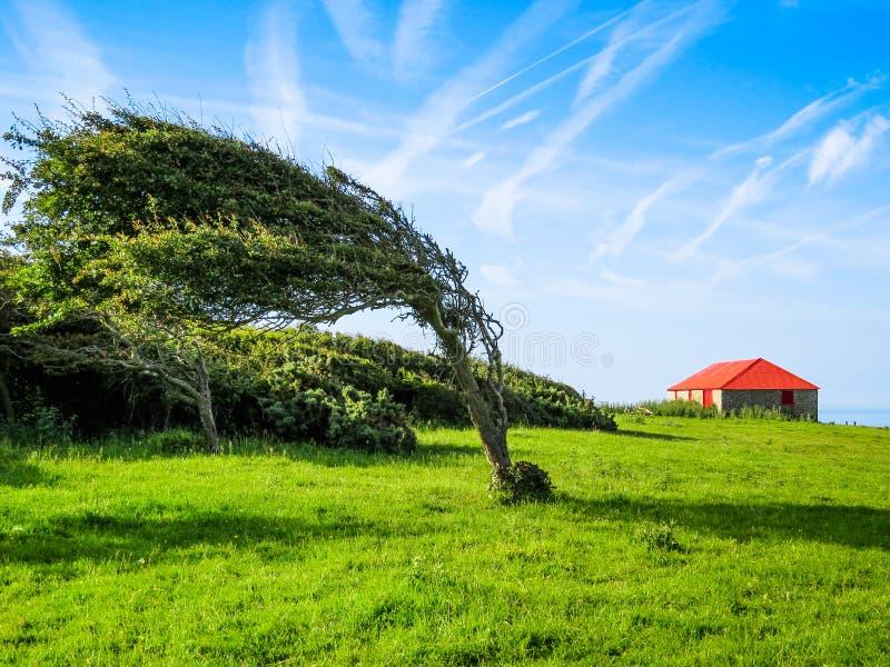 Única árvore no dia ventoso imagem de stock royalty free