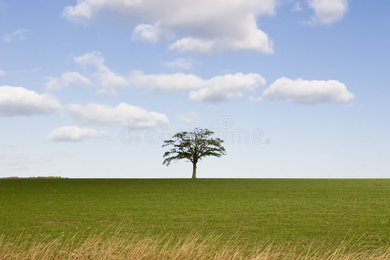 Única árvore no horizonte foto de stock royalty free