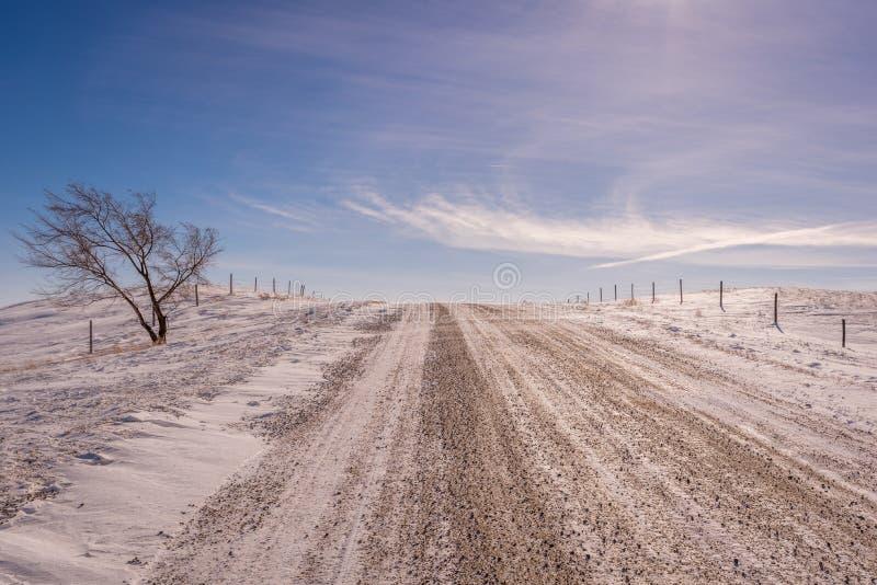 Única árvore no lado da estrada do cascalho no inverno nas pradarias foto de stock