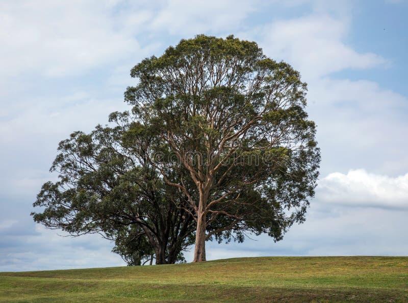 Única árvore no prado imagem de stock