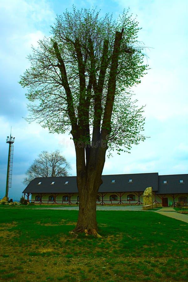 Única árvore no prado foto de stock