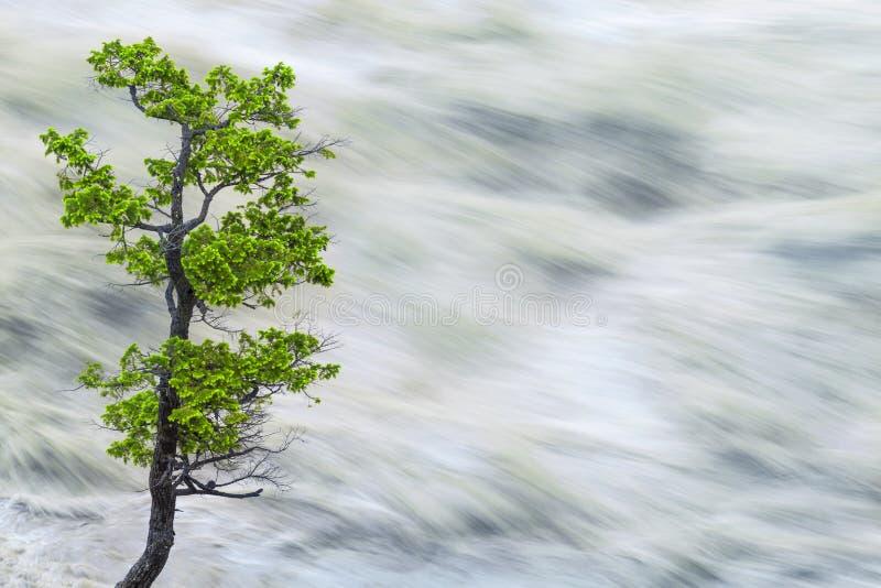Única árvore pela água do rio borrada movimento fotografia de stock royalty free