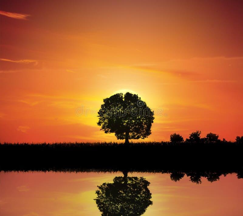 Única árvore pelo lago fotografia de stock royalty free