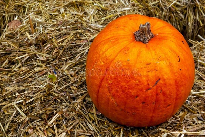 Única abóbora na decoração Autumn Fall Seasonal da exploração agrícola do monte de feno imagens de stock