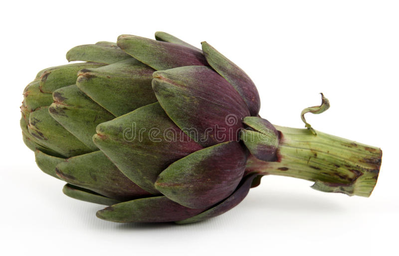 Única alcachofra isolada no branco fotografia de stock