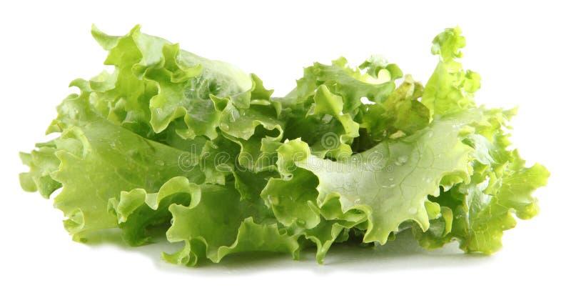 Download Única alface imagem de stock. Imagem de isolado, salad - 10068439