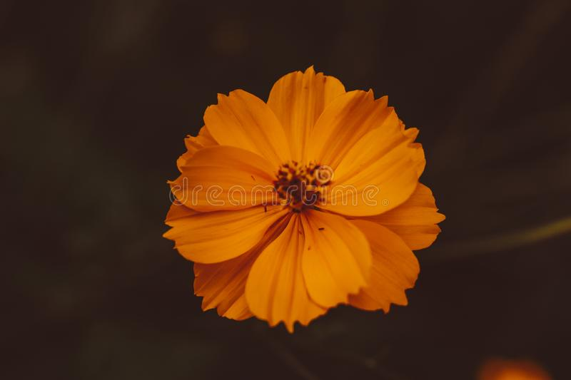 Flor royalty free stock photo