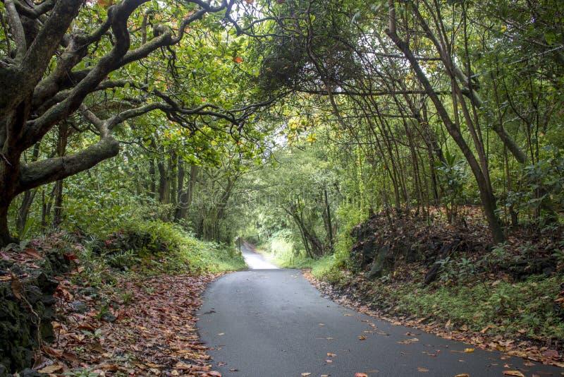 Única estrada da pista através das árvores arqueadas verde com folhas da queda foto de stock royalty free