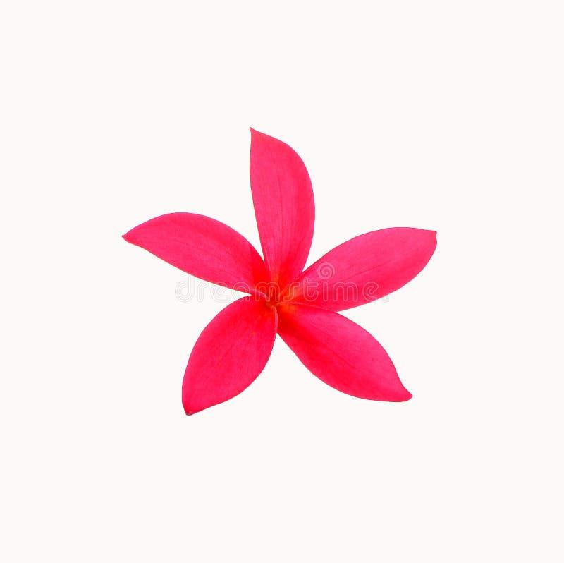 Única flor da orquídea imagem de stock