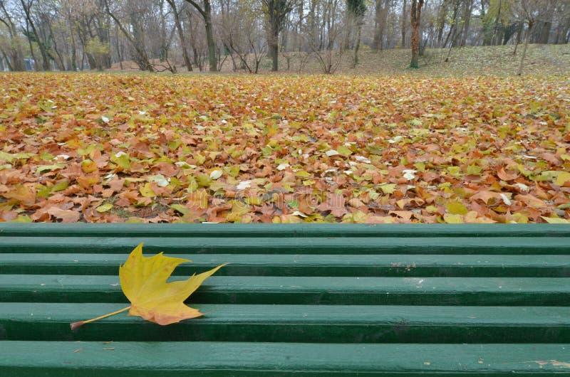 Única folha amarela da árvore plana que encontra-se no banco de madeira verde fotografia de stock