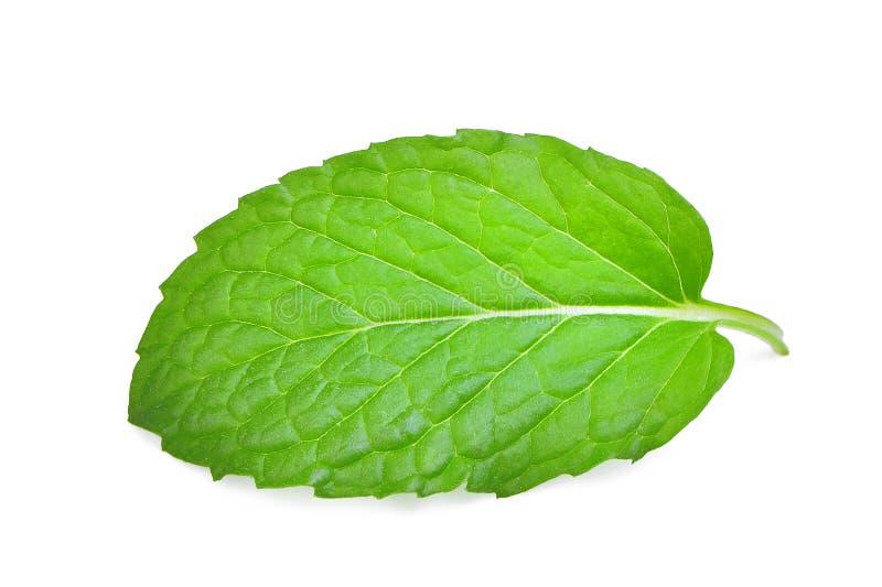 Única folha da hortelã fresca isolada no branco fotos de stock