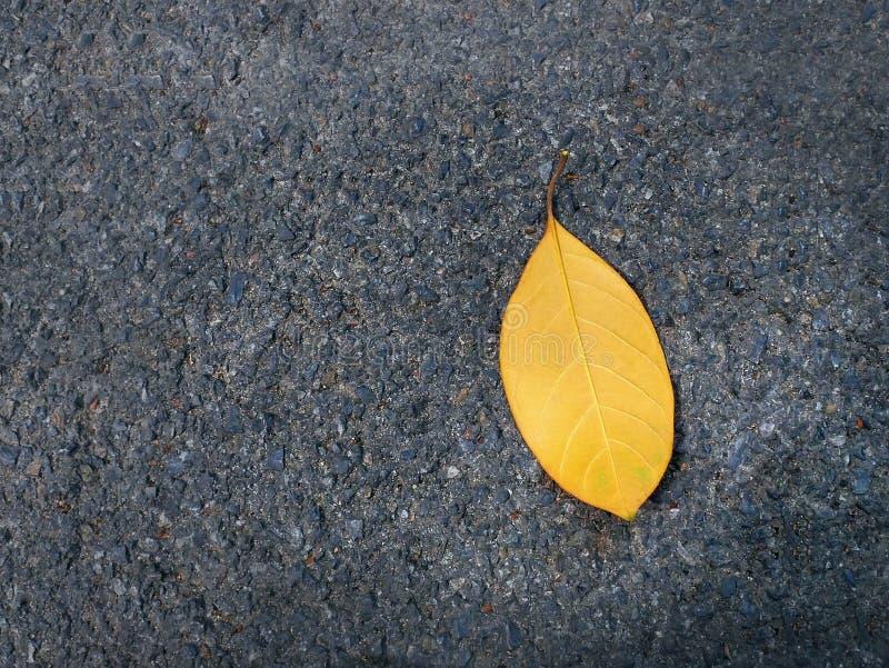 Única folha seca do close-up em Asphalt Road foto de stock