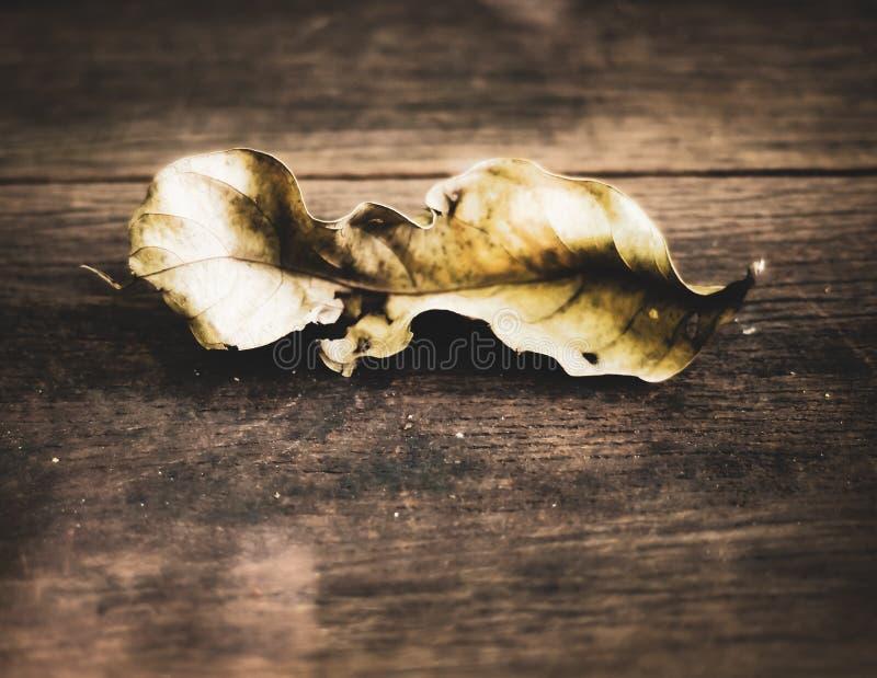 Única folha secada no assoalho de madeira nada última para sempre ideia do conceito do fundo da filosofia da mudança fotos de stock