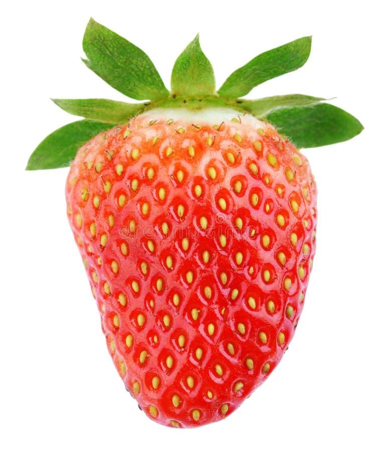 Única fruta madura da morango imagem de stock