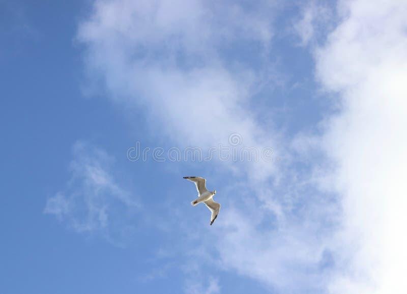 Única gaivota que voa à nuvem, no céu imagens de stock royalty free