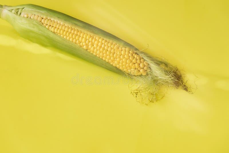 Única orelha de milho no fundo amarelo, dia ensolarado do outono imagens de stock royalty free