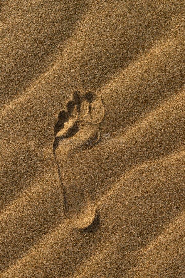 Única pegada dos pés desencapados na areia amarela Impressão brilhante do pé na areia na praia no verão Trace Of um o pé esquerdo imagens de stock