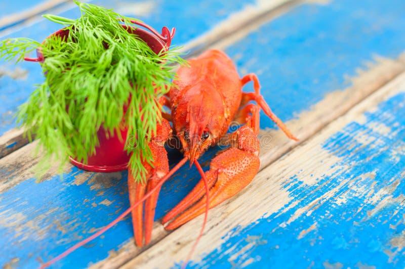 Únicas lagostas fervidas vermelhas inteiras e cubeta vermelha pequena do metal com aneto verde fresco imagem de stock