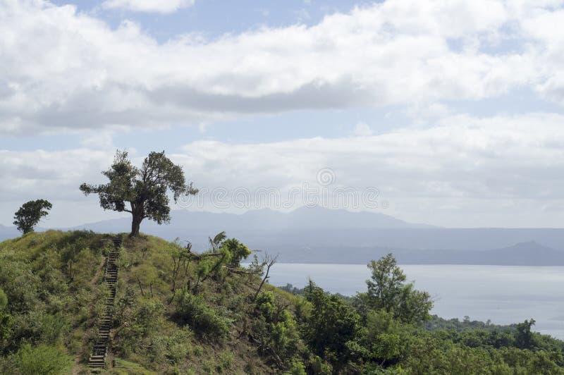 Único árbol en el lago y el volcán de desatención hilltop fotos de archivo