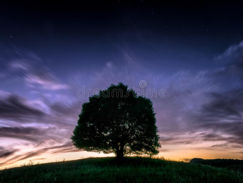 Único árbol legendario II fotografía de archivo