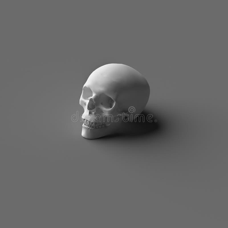 ÚNICO 3D que RENDE o CRÂNIO da CABEÇA HUMANA ilustração stock