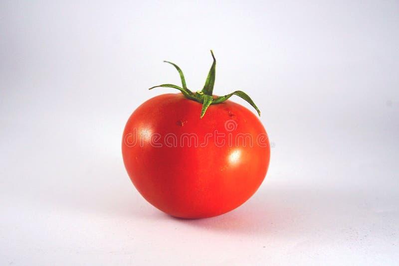 único do tomate do fruto isolado fotos de stock royalty free
