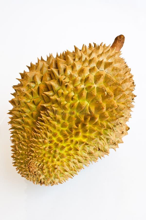 Único durian inteiro no fundo branco imagem de stock