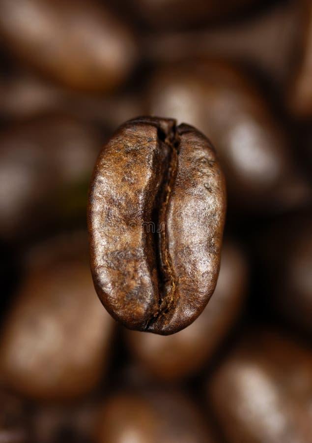 Único feijão de café fotografia de stock royalty free