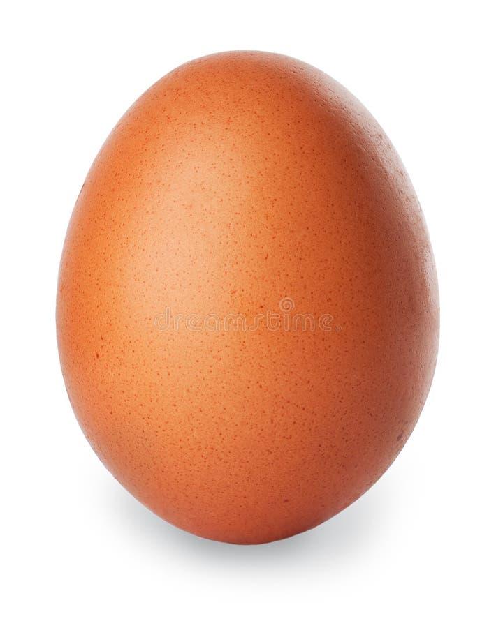 Único ovo marrom da galinha isolado no branco foto de stock