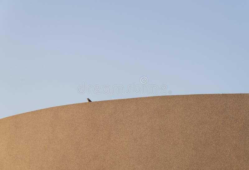 Único pássaro fotografia de stock