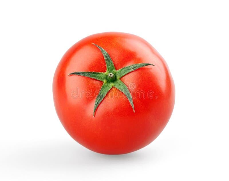 Único tomate maduro imagens de stock royalty free