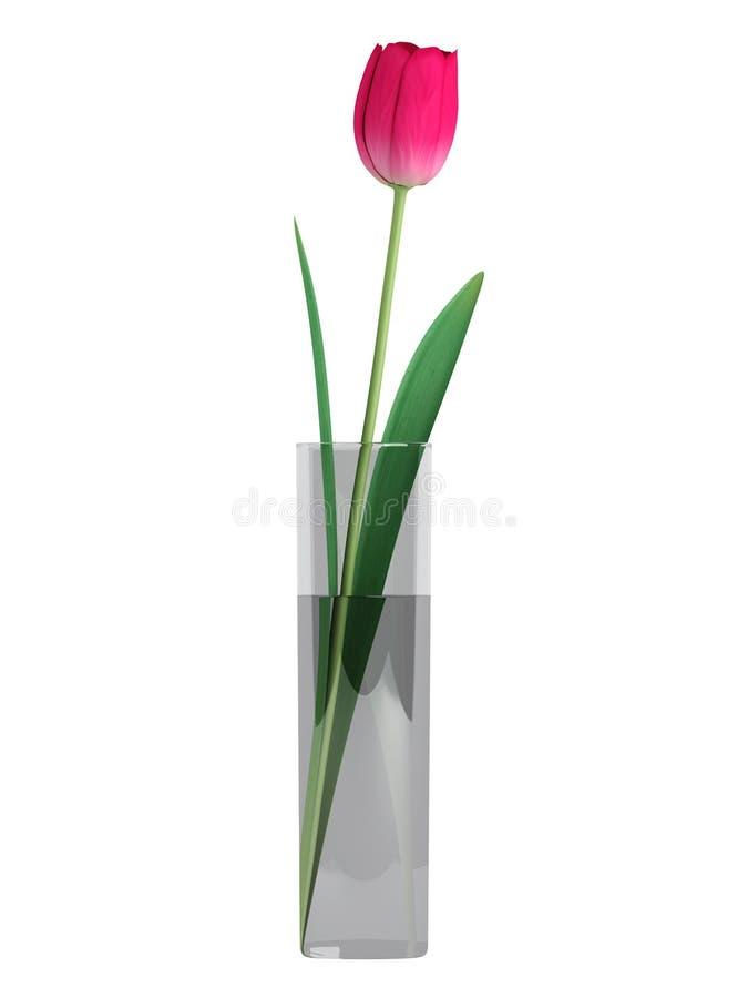 Único tulip no vaso de vidro ilustração do vetor